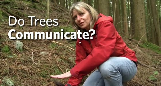"Prof. Suzanne Simard talks about ""Mother Trees"""