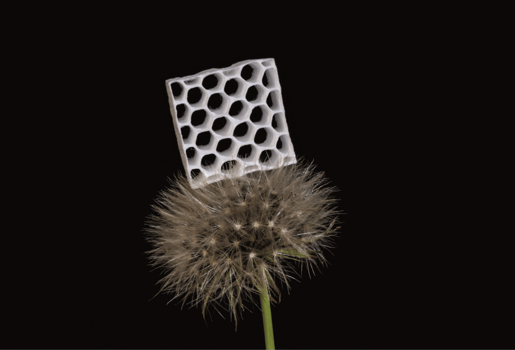 Lightweight honeycomb structure of cellulose standing on top of a dandelion