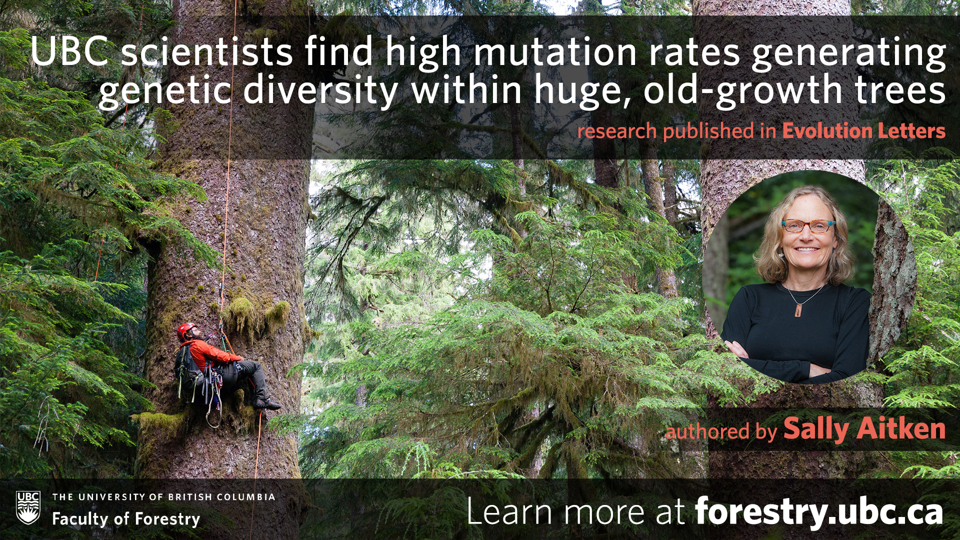 UBC Scientists Find High Mutation Rates Generating Genetic Diversity Within Huge, Old-growth Trees
