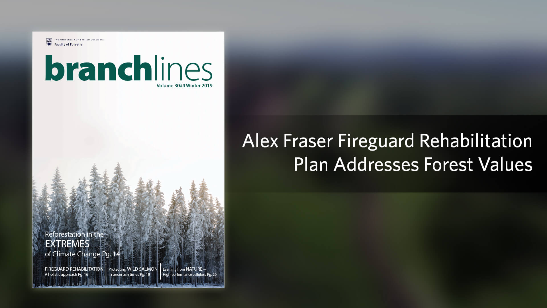 Alex Fraser Fireguard Rehabilitation Plan Addresses Forest Values