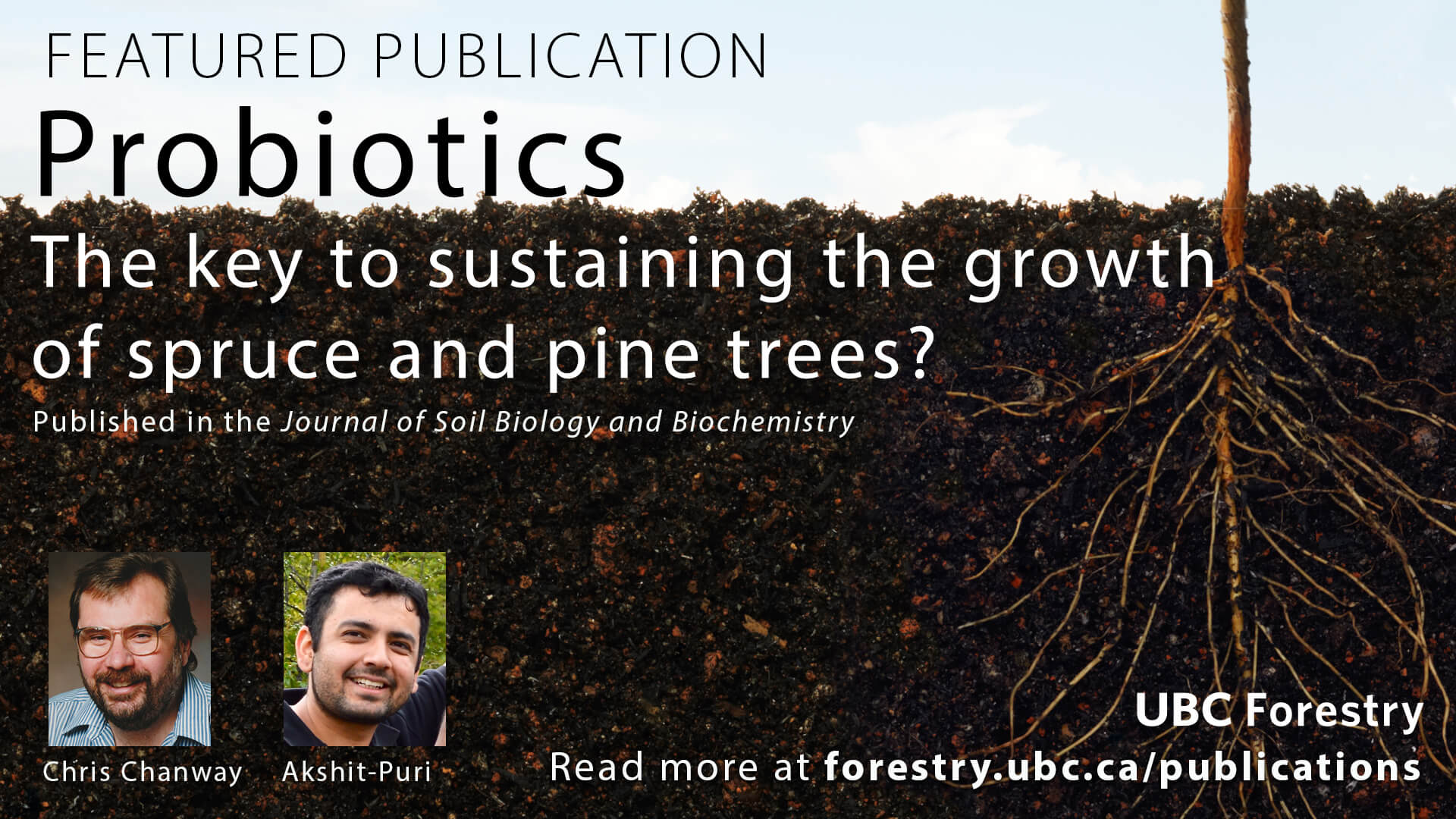 Probiotics – Key to Sustain the Growth of Spruce and Pine Trees?
