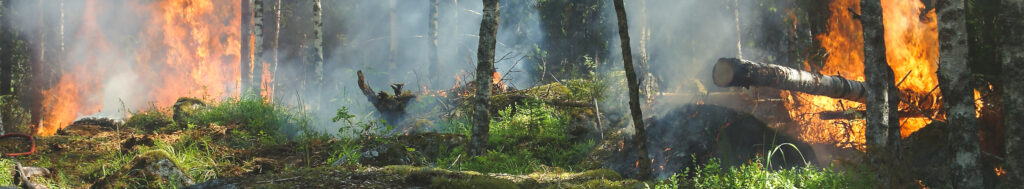 Forest on fire conservation