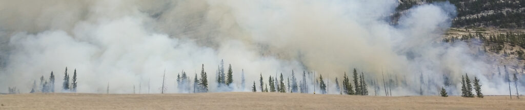 Large forest wildfire
