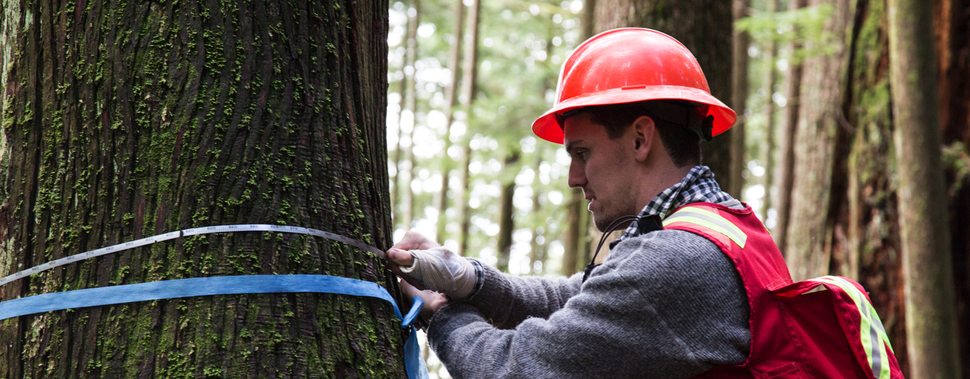 UBC Forestry Field Schools - Student Measuring Tree