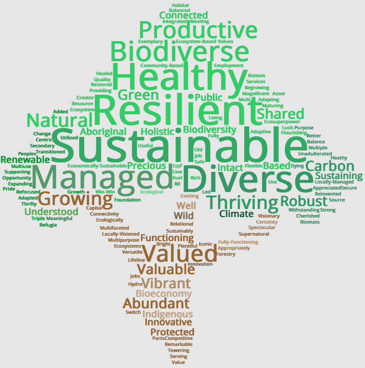 Top words Forests Summit 2020 participants used to describe how they would like to see BC's forest in 50 years