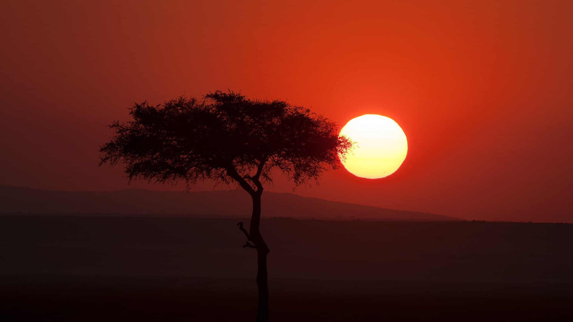 Sun setting across wild landscape draped in red and orange with a tree in the foreground