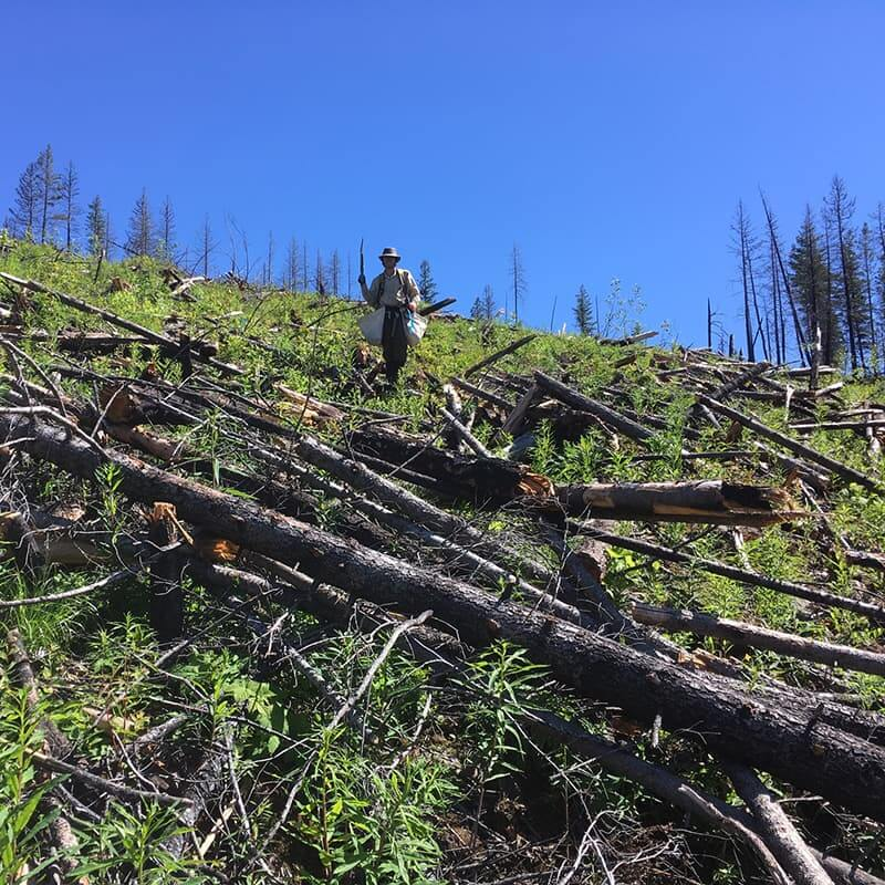 Tree planters standing among the wildfire damage at the Alex Fraser Research Forest