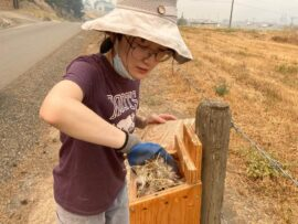UBC Forestry Student, Celine (Chenying) Li, is tending to an animal nest.