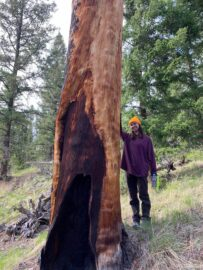 UBC Forestry Co-op student, Kathleen Sotelo, stands in front of a giant tree, smiling.