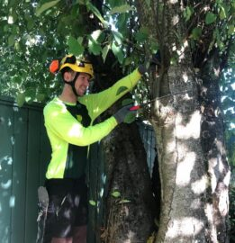 UBC Forestry Co-op student, Nicholas Mantegna, sits and works on a tree.