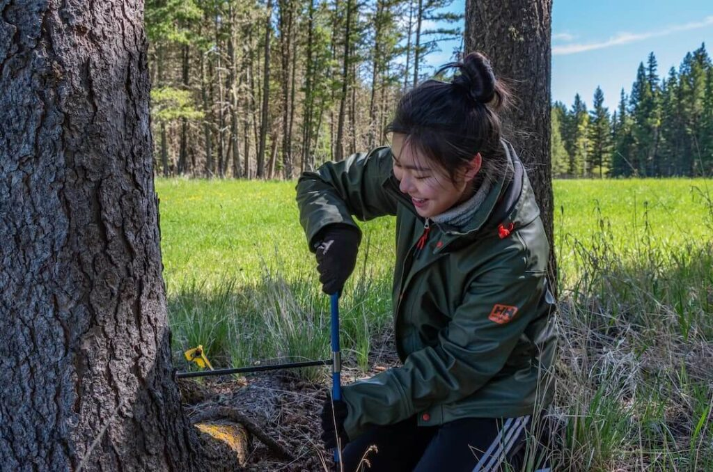 UBC Forestry Student, Wanyue Zhu, is kneeling by a tree and using tools.